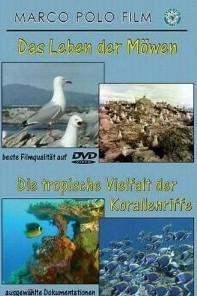 Das Leben Der Möwen & Tropische Vielfalt Der Korallenriffe